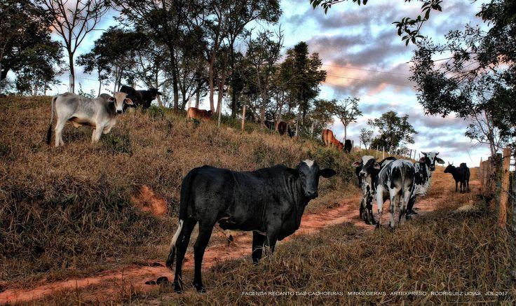 https://flic.kr/p/Vmrzuf | Recanto Das Cachoeiras .  2017  30 | Pousada Rural Facenda Recanto Das Cachoeiras . Sete Lagoas . Minas Gerais / Artexpreso . Rodriguez Udias / Sorrisos do Brasil . Fotografia . Jul 2017 (*PHOTOCHROME artwork edition)