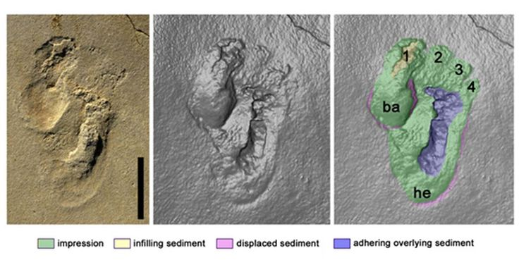 The footprints discovered on Crete -Controversial Footprint Suggests Human-like Creatures May Have Roamed Crete Nearly 6 Million Years Ago