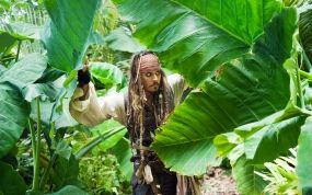 Обои пираты карибского моря: Джунгли, Джонни Депп, Джек Воробей, Пират, Фильмы, картинки, фото.