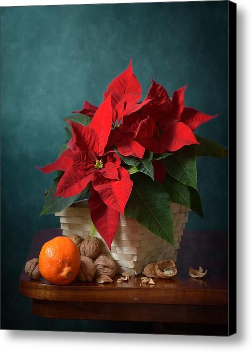 $52.04 Canvas Print: http://nikolay-panov.artistwebsites.com/products/clementine-and-red-star-of-bethlehem-flower-nikolay-panov-canvas-print.html Floral still life with fresh clementine, walnuts and bouquet of red star of Bethlehem flowers on deep blue background