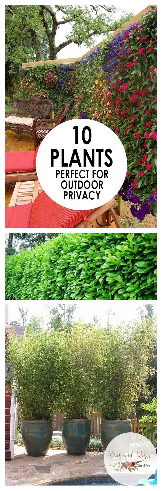 Living Privacy Fence Best 25 Living Privacy Fences Ideas On Pinterest Outdoor