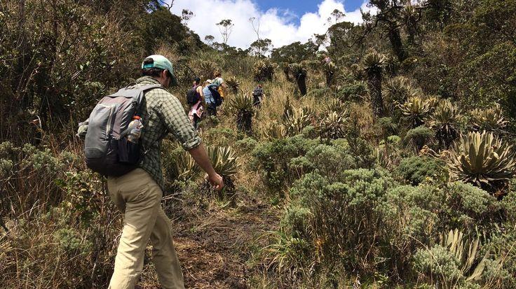 Expedition Colombia | Paramo Trek