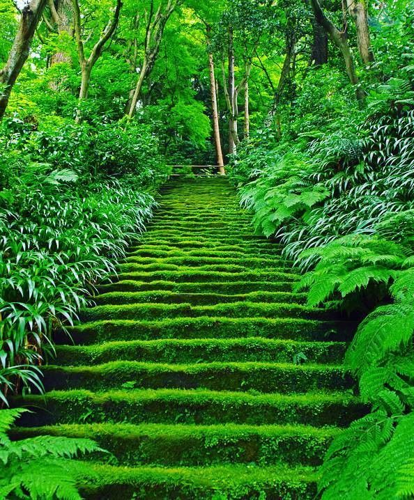 Myoho-ji Temple, Kamakura, Kanagawa, Japan, 妙法寺, 鎌倉, 神奈川, 日本, moss. green, temple