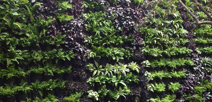 Muro verde de Arquimetrica y Arte en Restaurante Alimentari en Pachuca