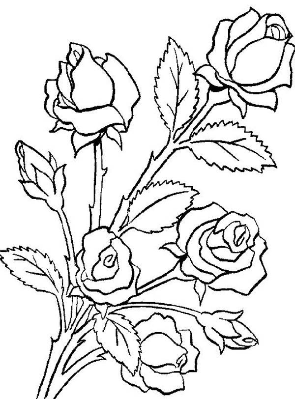 Flower Bouquet, : Flower Bouquet is Made of Roses Coloring Page