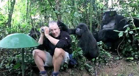 A Bored Gorilla Takes His Kids to the Zoo (Video) : TreeHugger