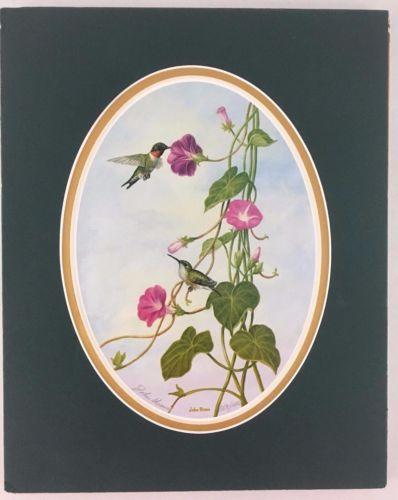 Wildlife Art Print by John Shaw Hummingbird Morning Glory Number 506 Matted 8x10