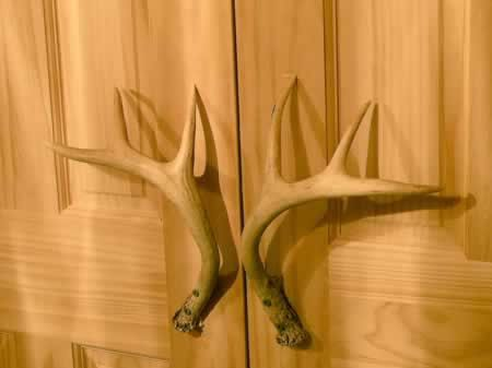 9 Best Images About Antler Door Knobs On Pinterest A