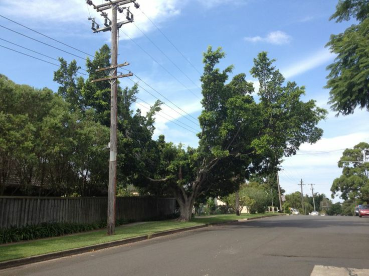 Tree and Powerlines