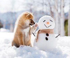 Snowman and Puppy