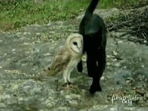 17 Reasons We Know The Owls Are Up To Something > They Don't Fear The Great Hunter.