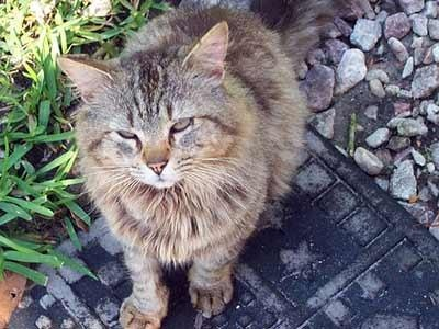 feral cats, need love tooFeral Cat