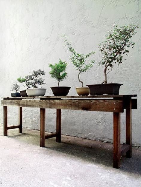 bonsai - my Dad taught Bonsai for many years & I had the joy in watching him.