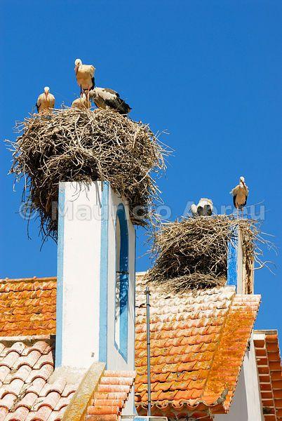 Storks in the nest, Comporta, Alentejo, Portugal