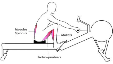 muscles-rameur-1