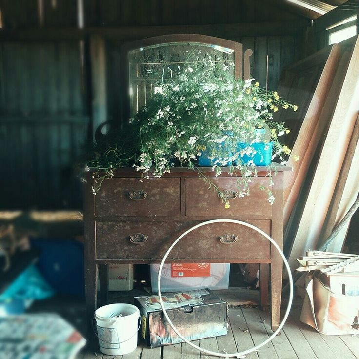 Sorting Coriander in the old storage shed.