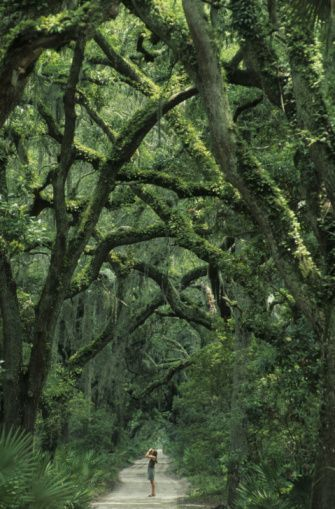 """Cumberland Island Georgia - named one of """"10 national park experiences of a lifetime"""" by USA Today!"""