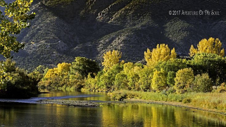 golden, enchanted, fall, foliage, leaves, trees, circle, taos, new mexico, nature, river, aspen, landscape