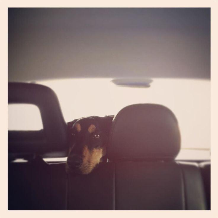 de la serie: me avisan si me estoy pasando con las fotos del perro #humberofthestreet