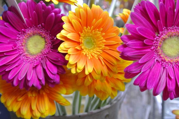 visite chez le fleuriste