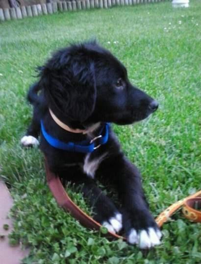 Éste es Coco, el perro más simpatico y juguetón. Gracias a Nueva Vida Adopciones por traerlo a nuestras vidas.