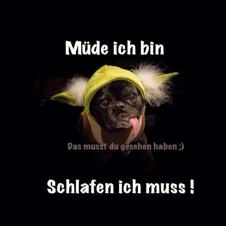 Wallpaper HD: German Funny, Good Morning, Hunde ️, Abend Gute Nacht ...