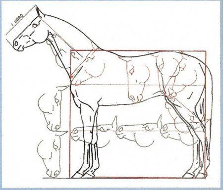 Best 25 Horse anatomy ideas on Pinterest Horse care Horse