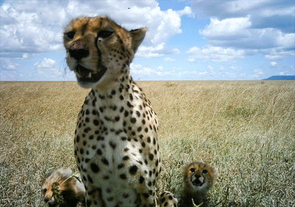 18 Amazing, Intimate Camera Trap GIFs of Serengeti Animals