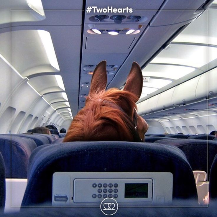 Two days until The Olympics in Rio begin for equestrians! Thanks to 🔷 @fei_global 🔷 for sharing this photo of, you know, the horses headed to Rio.... on First Class. 😉 Equestrian sports are at risk in the Olympics. Please tag your posts about Olympic equestrians with 🔷 #TwoHearts 🔷 and 🔷 #JoinTheJourney 🔷 to help show support for our sport and ensure that we remain part of the Olympics. Read more about it here: http://www.noellefloyd.com/watch-rio-olympics-equestrian-sports/ Thank…
