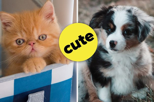 Name These Pets And We Ll Tell You What Dog Breed You Are What Dogs Dog Breeds Pets
