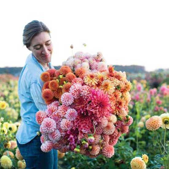 Cut flowers are one of the highest-grossing crops per acre. Create a debt-free farm and surround yourself with beauty by following this expert advice.