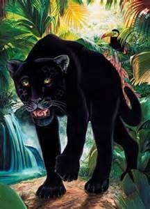 zwarte panter - Bing Afbeeldingen