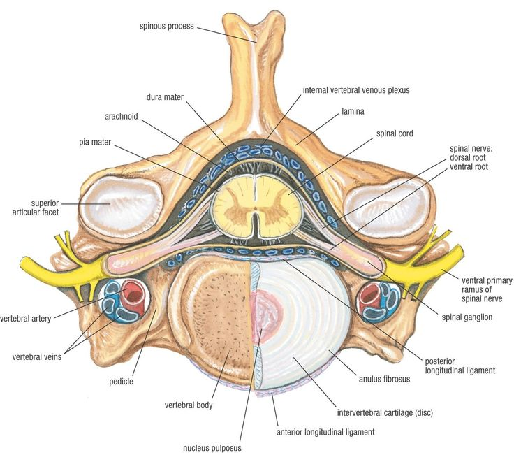 114 best images about neuro on pinterest | bone doctor ... spine diagram canal #14