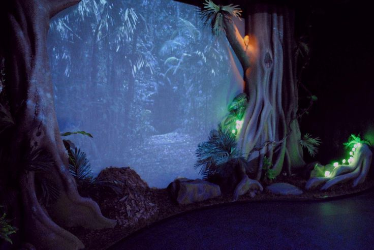 Nighttime rainforest experience at Mary Cairncross #immersiveexhibit #MCSR #FocusProductions