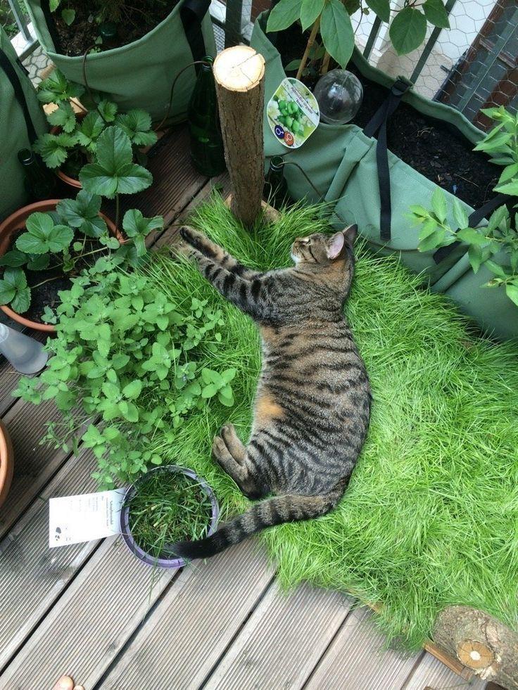 Katzen-Grasbox für den Balkon