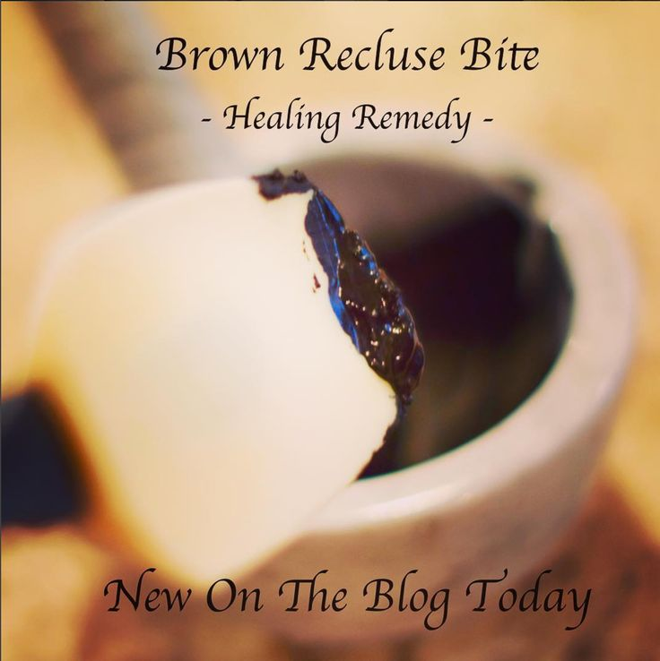 I made a natural diy remedy for a brown recluse bite with activated charcoal and echinacea - it really worked!! See the full recipe -