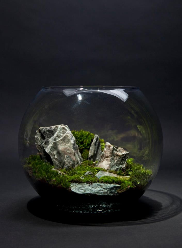 174 best moss terrarium paludarium vivarium images on for Fish tank terrarium