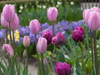 Kwiaty cebulowe w ogrodzie - najmodniejsze style i inspiracje