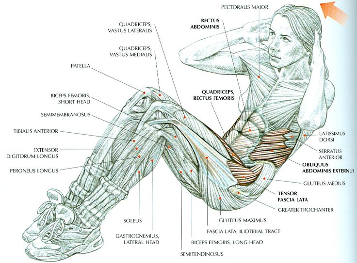 Womens Strength Training Anatomy