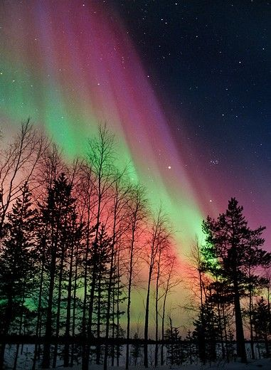 Stock Photo: 4070-9004 Aurora borealis storm colours in night sky, northern Finland, February 2002, winter