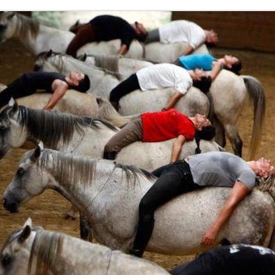 Equestrian yoga