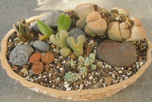 composition of succulents