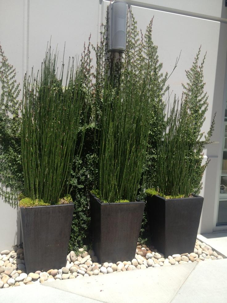 Good Patio Plants