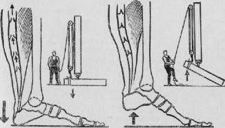 ПОСТУЧИТЕ ПЯТКАМИ О ПОЛ_акая чудодейственная виброгимнастика, предложенная академиком Микулиным, способна избавлять мышцы ног от избытка молочной кислоты, улучшать венозное кровообращение.