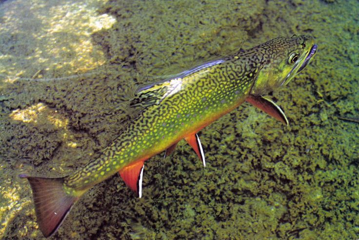 17 b sta bilder om projects to try p pinterest for Fly fishing west virginia