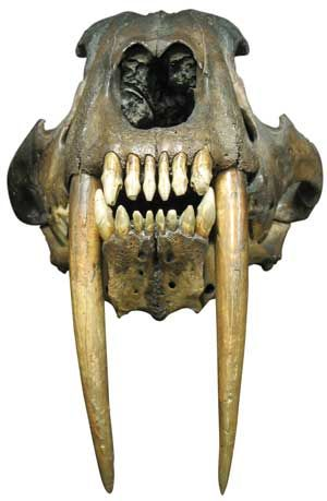 563 best images about Fossils on Pinterest | Extinct ...