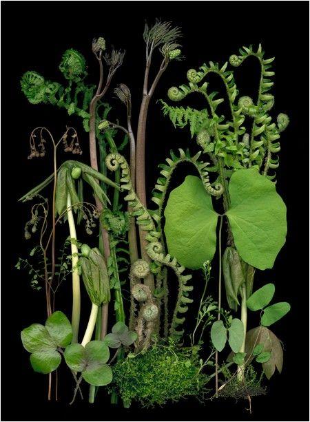 Green | Grün | Verde | Grøn | Groen | 緑 | Emerald | Colour | Texture | Style | Form | Pattern | Botanical
