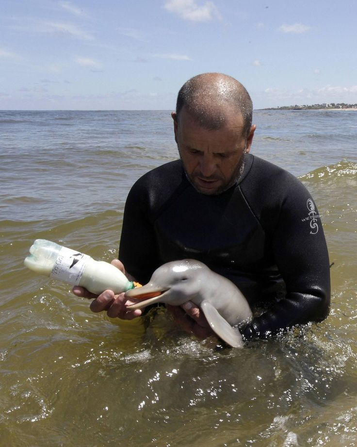 Insanely Cute Pictures Of A Man Taking Care Of An Orphaned Baby Dolphin