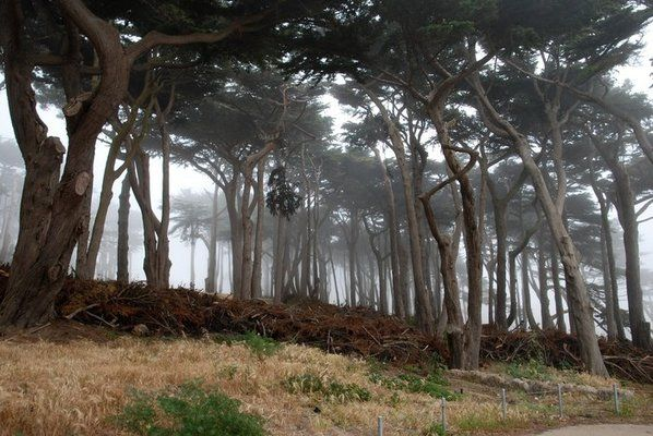 Foggy day on the Lands End Trail, yet another one of San Francisco's open public spaces.
