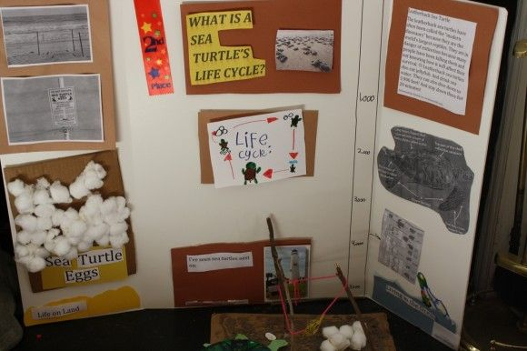 15 best School images on Pinterest Science projects, Science - science project report